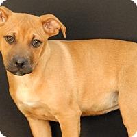 Adopt A Pet :: Kimber - Newland, NC