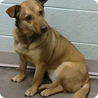 Adopt A Pet :: Gilda- Adopted - Decatur, GA
