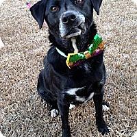 Adopt A Pet :: Donny - Baton Rouge, LA