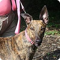 Adopt A Pet :: ZE's Nikita
