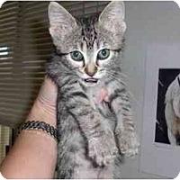 Adopt A Pet :: Trout - Davis, CA