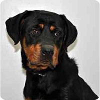 Adopt A Pet :: Joe - Port Washington, NY