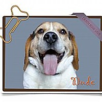Adopt A Pet :: Dude - Portland, OR