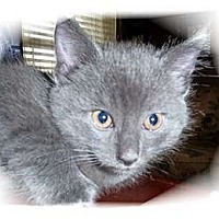 Adopt A Pet :: Kismet - Montgomery, IL
