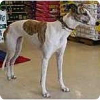 Adopt A Pet :: Sinner - Brandon, FL