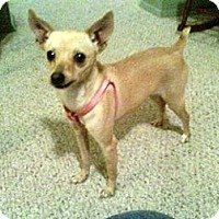 Adopt A Pet :: Belle - Only $45 adoption! - Litchfield Park, AZ