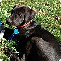 Adopt A Pet :: *Jake - Westport, CT