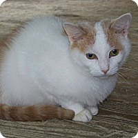 Adopt A Pet :: Felix - Dover, OH