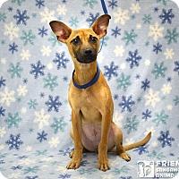 Adopt A Pet :: Brandi - Springfield, IL