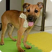 Adopt A Pet :: Angelo - Surrey, BC