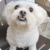 Adopt A Pet :: Stewie - 10 years old - Charleston, SC