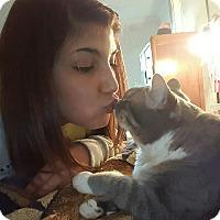 Adopt A Pet :: Maddee - Homewood, AL