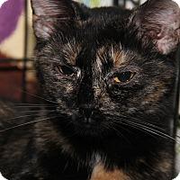Adopt A Pet :: Lilly - Marietta, OH