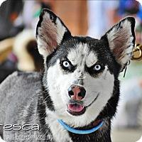 Adopt A Pet :: Fresca - Carrollton, TX