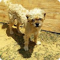 Adopt A Pet :: Sassy #5 - Graceville, FL