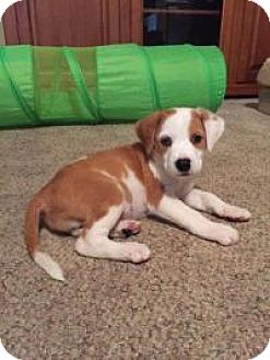 Cinnamon | Adopted Pup...
