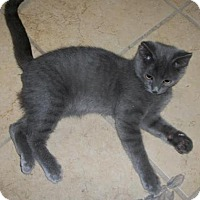 Adopt A Pet :: Beamer - Lacon, IL