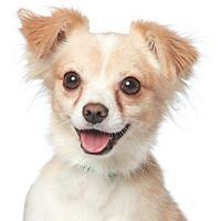 Adopt A Pet :: Ricky Martin - Los Angeles, CA