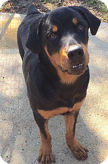 Rottweiler Dog for adoption in McDonough, Georgia - Neiko