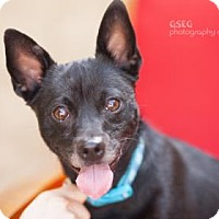 Adopt A Pet :: Mojo - Dallas, TX