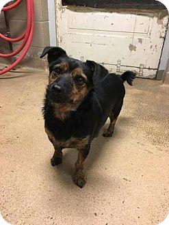 Terrier (Unknown Type, Medium) Mix Dog for adoption in Fargo, North Dakota - Jaxon