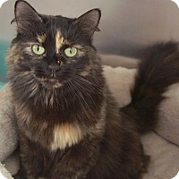 Adopt A Pet :: Maggie Mae - Englewood, FL