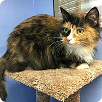 Adopt A Pet :: TIZZY - Canfield, OH