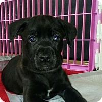 Adopt A Pet :: Bode Miller - Wyoming, MI