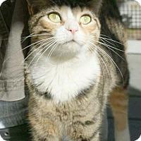 Adopt A Pet :: Libby - Washington, DC