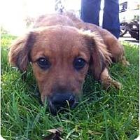 Adopt A Pet :: SKYE - Hagerstown, MD