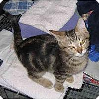 Adopt A Pet :: Kahn - Davis, CA
