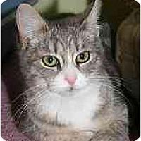 Adopt A Pet :: Bambi - Marietta, GA
