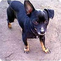 Adopt A Pet :: Houdini - dewey, AZ