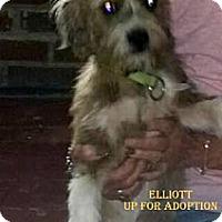 Adopt A Pet :: ELLIOTT - W. Warwick, RI