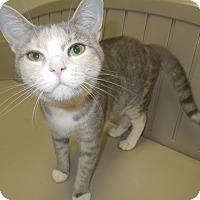 Adopt A Pet :: Jill - Medina, OH
