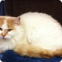 Adopt A Pet :: Emma L - Sacramento, CA