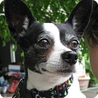Adopt A Pet :: Vida - Salem, OR