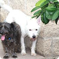Adopt A Pet :: Jellybean & Pepper - Norwalk, CT