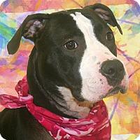 Adopt A Pet :: Gaia - Cincinnati, OH