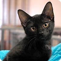 Adopt A Pet :: Gideon - Winchendon, MA