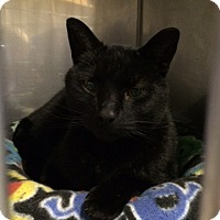 Adopt A Pet :: Panther - Byron Center, MI