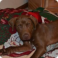 Adopt A Pet :: Orville - Lawrenceville, GA