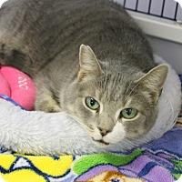 Adopt A Pet :: Dali - Medina, OH
