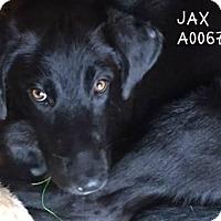 Adopt A Pet :: Jaxon - Conroe, TX