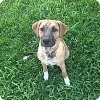 Adopt A Pet :: Kyle - Houston, TX