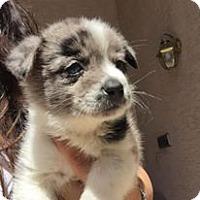 Adopt A Pet :: Taku - Phoenix, AZ