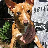 Adopt A Pet :: Griffey - Salem, OR