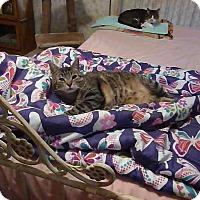 Adopt A Pet :: Ned - Richmond, VA