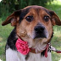 Adopt A Pet :: Bessie - Glastonbury, CT