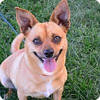 Adopt A Pet :: Misha - Meridian, ID